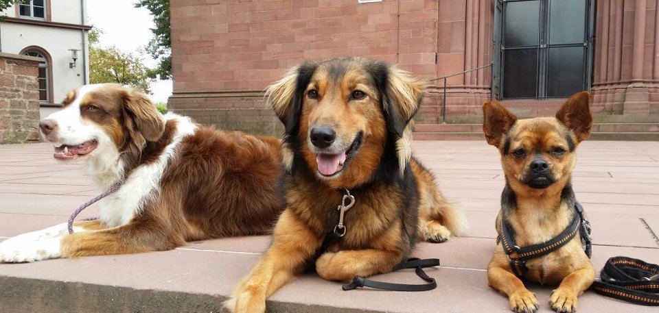 Hunde auf Kirchenplatte
